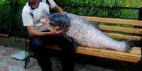 Толстолобик 37 кг