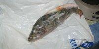 Зимняя рыбалка в Казачьих Лагерях