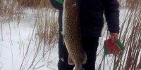 Дунай, зимняя рыбалка на щуку.