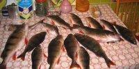 16-18 февраля. Рыбалка на окуня. Кизомыс.