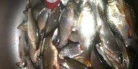 Зимняя рыбалка на тарань. Турунчук.